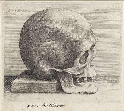 Anatomische studie van een schedel