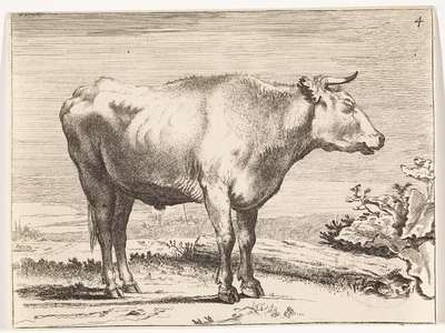 Staande os, naar rechts; Ossen en koeien