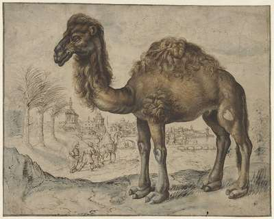 Dromedary in an Eastern Landscape with a City