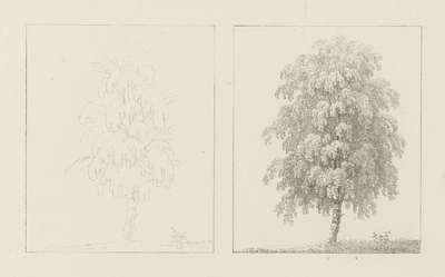 Albumblad met twee voorstellingen van van twee beukenbomen: links het ontwerp, rechts de uitvoering