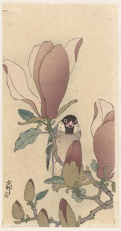 Mus op bloeiende magnolia tak
