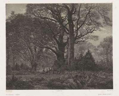 Fôret de Fontainebleau