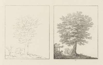 Albumblad met twee voorstellingen van twee beukenbomen: links het ontwerp, rechts de uitvoering