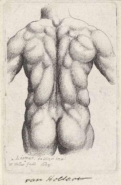 Anatomische studie van de torso van een man, op de rug gezien