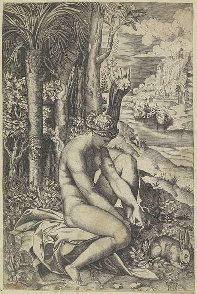 Venus en de roos
