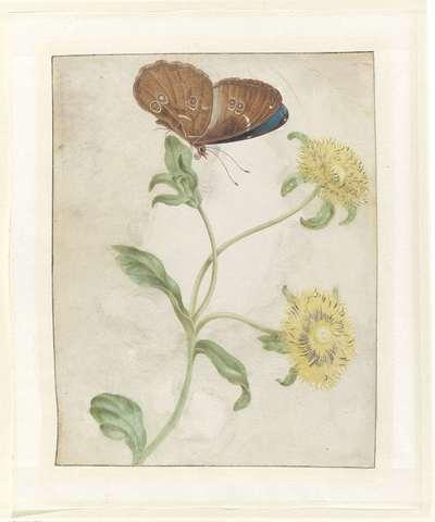 Image from object titled Vlinder op de knop van een plant met gele bloemen