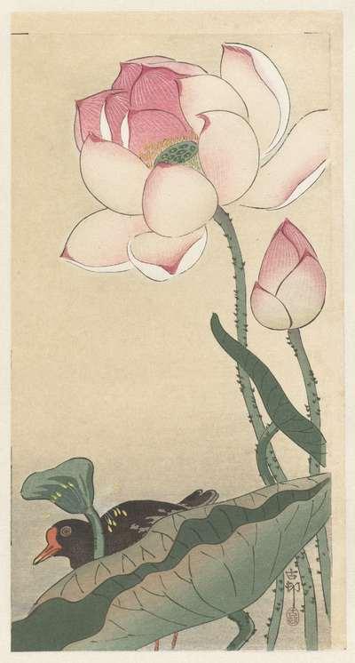 Gallinule with Lotus Flowers