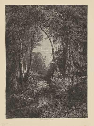 Image from object titled Doorkijkje in bos