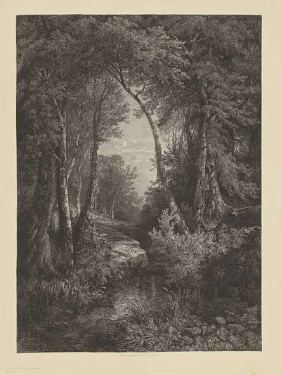 Doorkijkje in bos