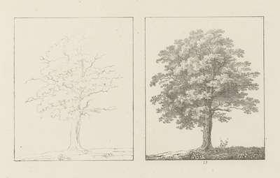 Albumblad met twee voorstellingen van twee eikenbomen: links het ontwerp, rechts de uitvoering