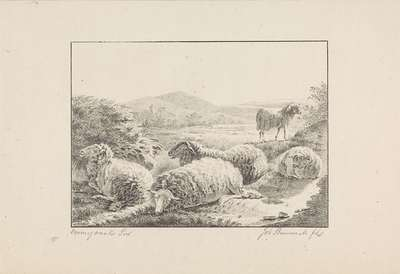 Vijf schapen in een weide