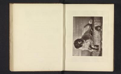 Fotoreproductie van een prent naar het schilderij A Distinguished Member of the Humane Society door Edwin Henry Landseer