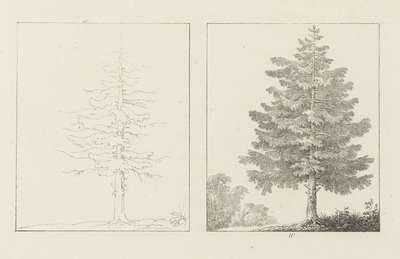 Albumblad met twee voorstellingen van van twee sparrenbomen: links het ontwerp, rechts de uitvoering