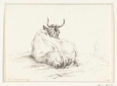 Liggende koe, van achteren