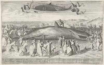 Potvis gestrand bij Egmond aan Zee, 1764; Cagelot of Potwalvis, lang omtrent 60 Voeten, even benoorden Egmond op Zee Levend Gestrand op den 15 Feruary 1764. den 1 Maart aldaar in Veiling Verkogt voor 810 Guldens