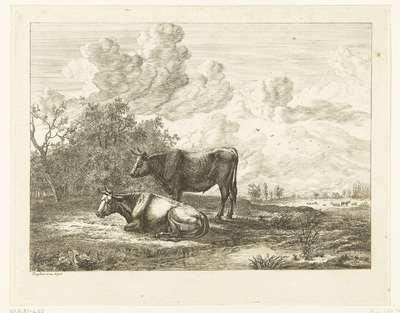 Een stier en een koe in een weiland