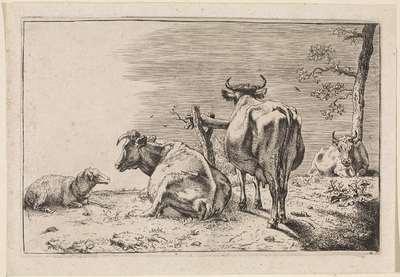 Twee koeien van achteren gezien