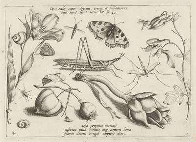 Image from object titled Dieren en planten rond een sprinkhaan en een artishock; Insecten, bloemen en vruchten; Archetypa studiaque patris GeorgiI HoefnageliI