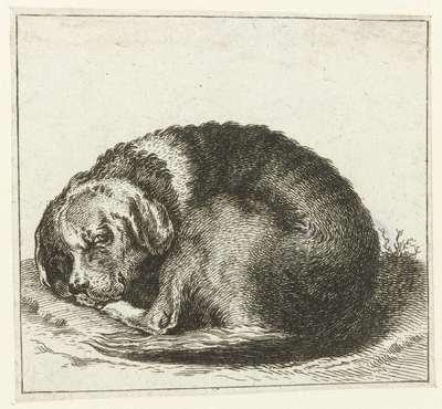 Liggende hond met vlekken