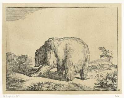 Staande beer, van achter gezien; Beren