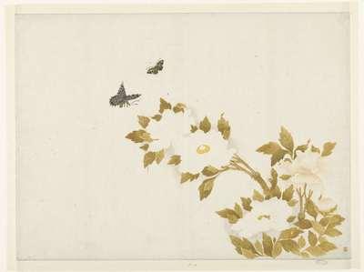 Image from object titled Peony flowers and butterflies; Bloemen en vlinders