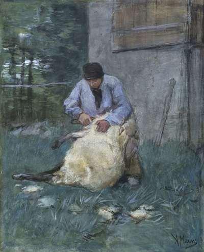 Image from object titled Schapenscheerder