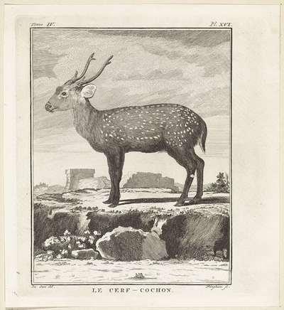Hert; Le Cerf-Cochon