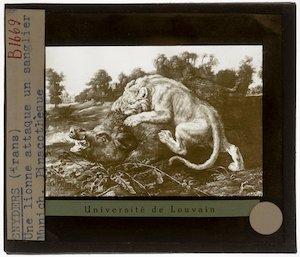Frans Snyders. Aanval van een leeuwin op een beer