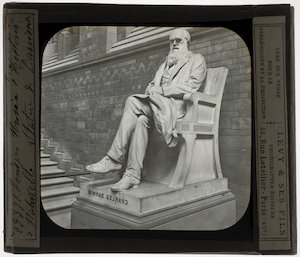Image from object titled Joseph Boehm. Charles Darwin
