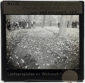 Brussels. Ter Kamerenbos; Visitors are viewing the anemones on a small lawn in the park