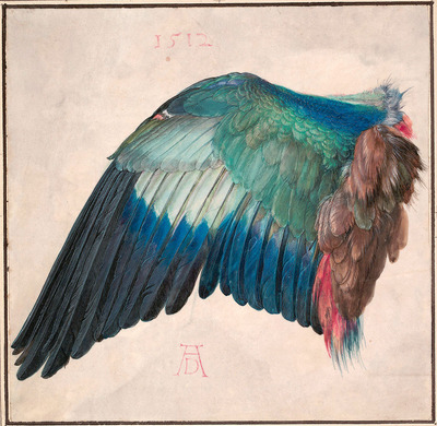 Image from object titled Wing of a European Roller