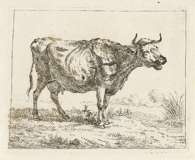 Loeiende koe aan waterkant