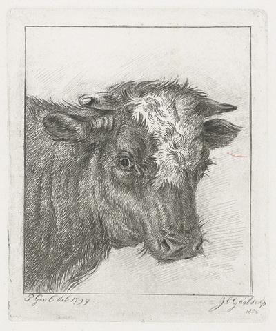 Kop van een koe met witte kol
