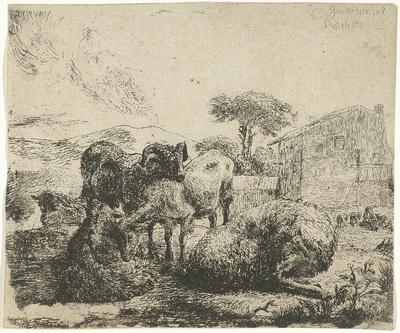 Groep van vijf schapen