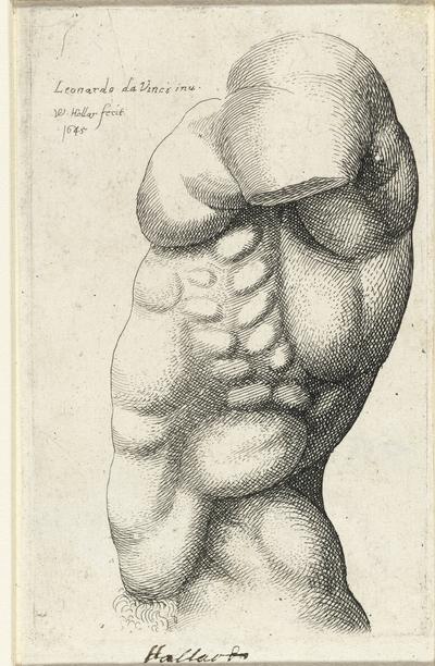 Anatomische studie van de torso van een man, van opzij gezien