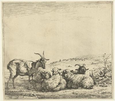 Twee geiten en drie schapen