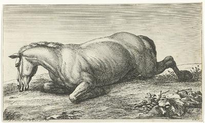 Gesneuveld paard op de buik liggend; Gesneuvelde paarden
