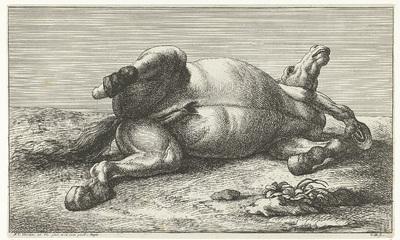 Gesneuveld paard liggend op de linkerzij; Gesneuvelde paarden