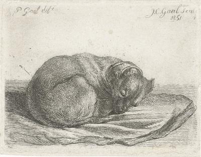 Slapende hond, liggend op een deken