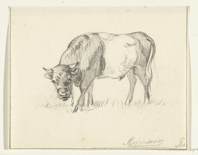 Grazende stier, naar links