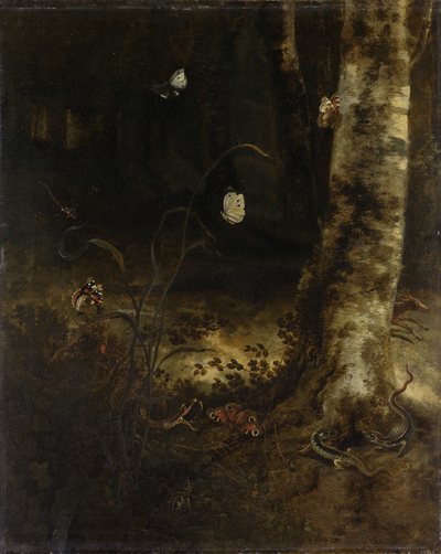 Image from object titled Forest Floor with a Snake, Lizards, Butterflies and other Insects