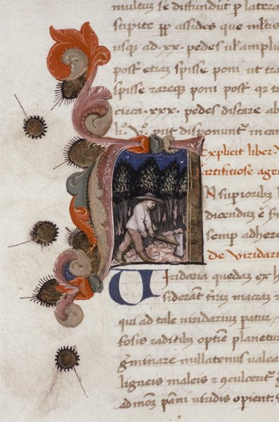 Liber ruralium commodorum.