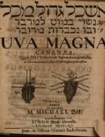 Uva magna Cananaea; resp. Simon Gross.