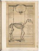 Le Squelette du cheval dessiné d'après celui de l'Académie des sciences. (Ch. Parrocel Dli., J. Audran sculp.)