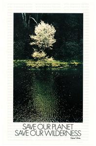 """Manifesto Olivetti sulla campagna ecologica """" Save our planet save our wilderness"""": foto di albero in riva al fiume"""