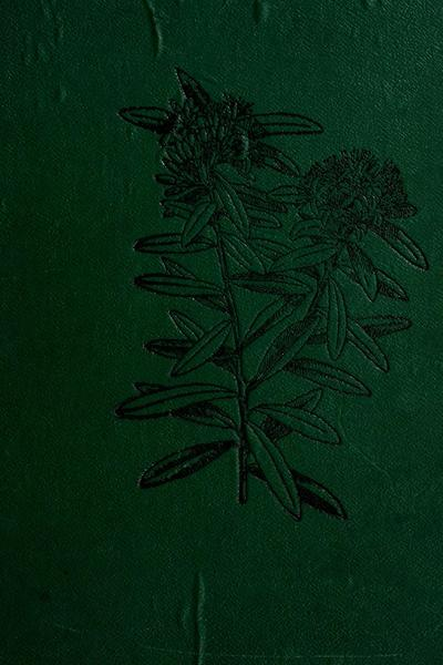 Illustrations of the New Zealand flora / edited by T.F. Cheeseman with the assistance of W.B. Hemsley ; the plates drawn by Matilda Smith.