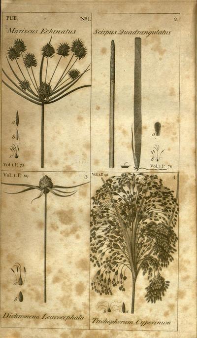 A sketch of the botany of South Carolina and Georgia /by Stephen Elliott.