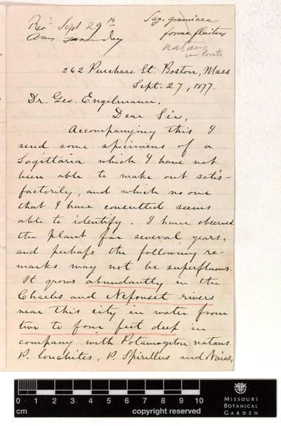 Correspondence : Faxon (Charles) and Engelmann (George), 1877-1883.