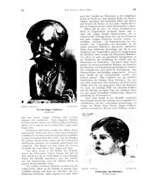 Porträt Eugen d'Alberto : (Bronzebüste) (Ost und West)