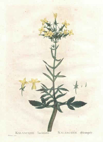 Succulents Vol. 2